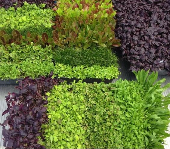 Выращивание растений для пищи.