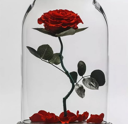 Роза   широко распространенный многолетний кустарник